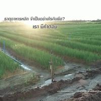 ปุ๋ยกิฟฟารีน ธาตุอาหารหลัก เกษตรยุคใหม่ ลดต้นทุน เพิ่มผลผลิต